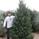 Man standing next to Christmas Tree