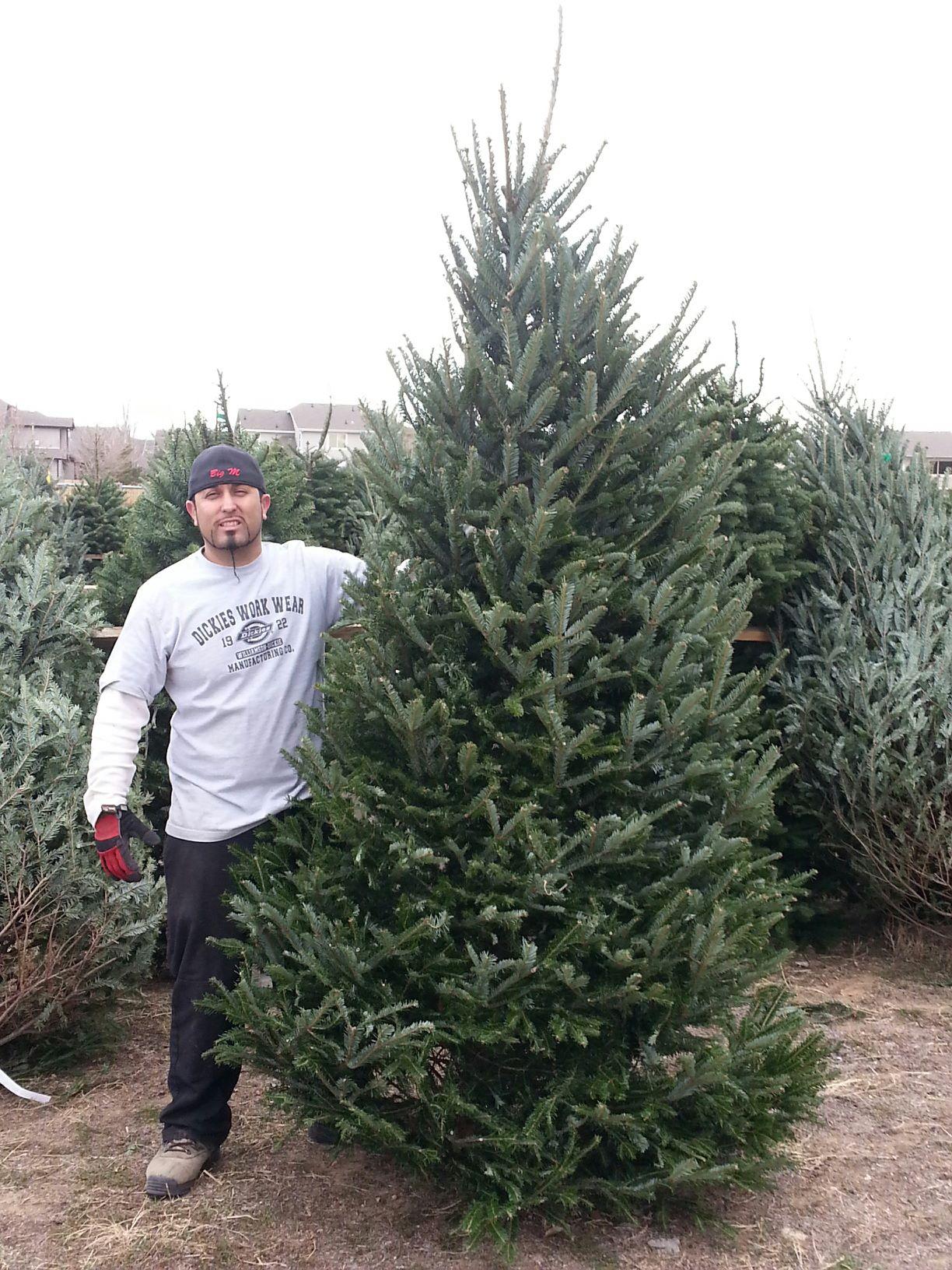 Fresh Cut Christmas Trees Near Me.Christmas Tree Sales
