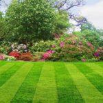Beautiful, green lawn and garden