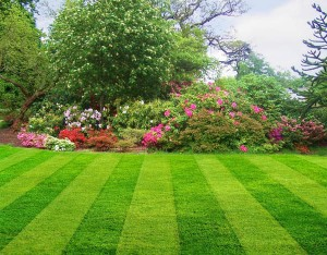 Beautiful, green lawn and garden